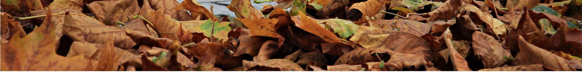 Spring And Fall Leaf Cleanup Services Simply Lawncare